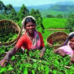 Горящие туры на Шри-Ланку, Лучшие туры на Шри-Ланку из Киева, отдых на Шри-Ланке